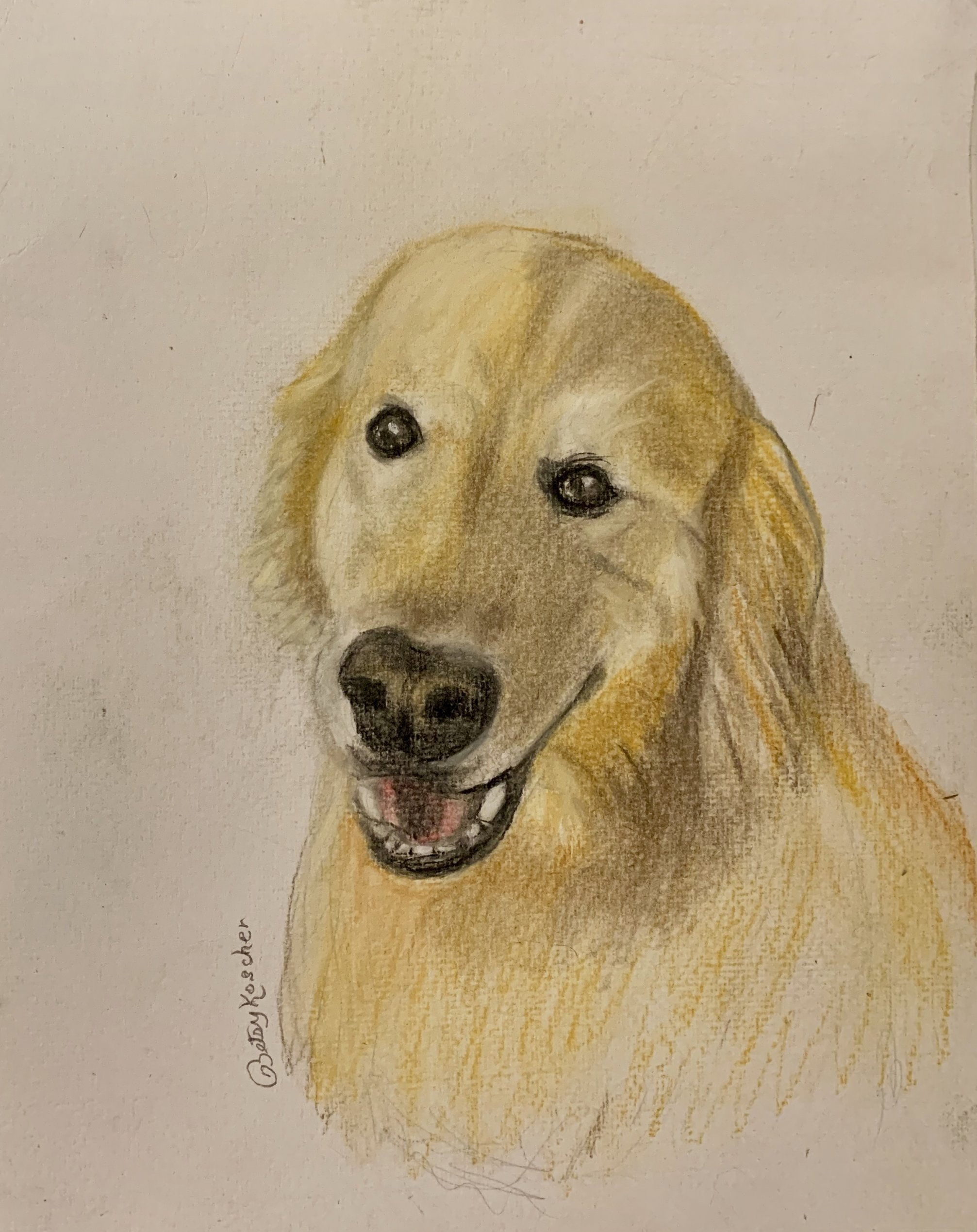 8X10 pastel dog portrait by Betsy Koscher $100.00